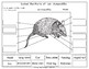 Printables: Label the Parts of an Armadillo