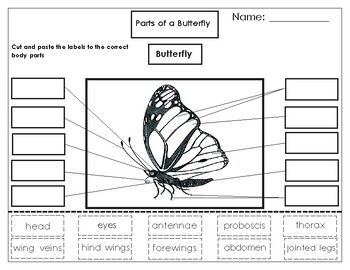 Printables: Label the parts of a Monarch Butterfly
