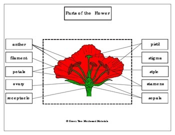 Printables: Label the parts of the flower/ poppy