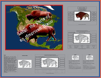 Printables: Parts of the American Bison