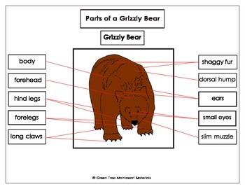 Printables: Label the parts of a Grizzly Bear