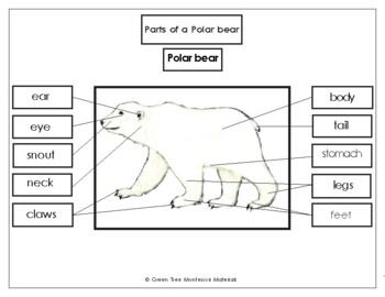 Printables: Label the Parts of a Polar Bear