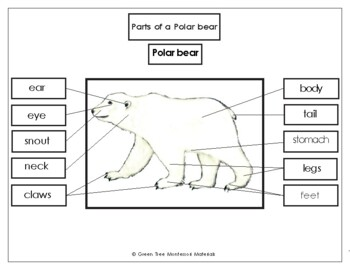 Printables Label The Parts Of A Polar Bear