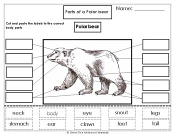 original 993446 2 printables label the parts of a polar bear by green tree montessori