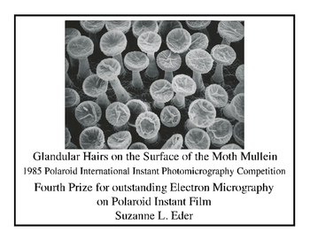 Prize Winning Images from the Scanning Electron Microscope