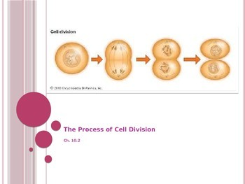Process of Cell Divison