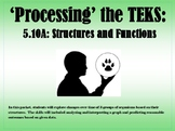 Processing the TEKS: Adaptations, Structures, and Functions (5.10A)