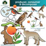 Producer - Consumer - Decomposer Clip Art Set