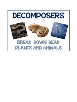 Producer, Consumer and Decomposer Anchor Charts