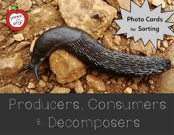Producer, Consumer and Decomposer Sorting Activity (Grade 4 Ontario Science)