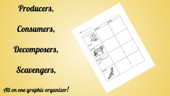Producer, consumer, scavenger and decomposer graphic organizer