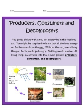 Producers, Consumers & Decomposers BUNDLE -Science