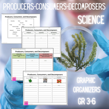 Producers, Consumers, Decomposers Graphic Organizer