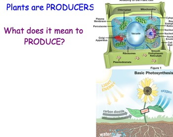 Producers, Consumers & Decomposers - Lesson Presentations, Videos