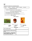 Producers, Consumers, and Decomposers Assessment
