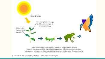 Producers, Consumers, and Energy Flow Lesson