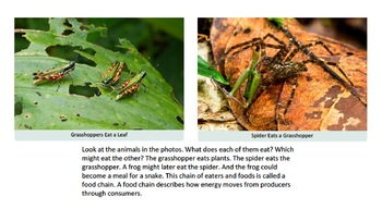 Producers and Consumers in a Rainforest Ecosystem (PDF)