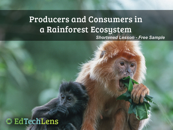 Producers and Consumers in a Rainforest Ecosystem PDF - Free Sample