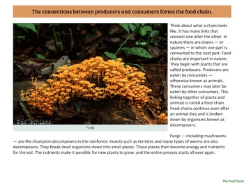 Producers and Consumers in a Rainforest Food Chain PDF