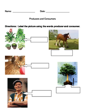 Producers vs Consumers (biology, life science)
