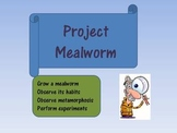 Project Mealworm! - Insect Study