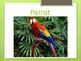 Projectable ESL Flashcards: Animals (PowerPoint, 55 Slides)