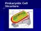 Prokaryote: Bacteria