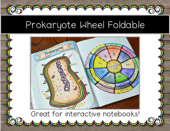 Prokaryote Cell Foldable