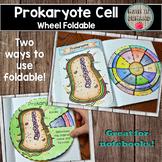 Prokaryote Cell Wheel Foldable