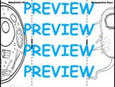 Prokaryote & Eukaryote Comparison Foldable