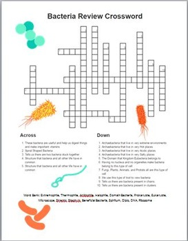 Prokaryote (Bacteria) Vocabulary Review Crossword (With Key)