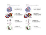 Prokaryote Vs Eukaryote Vs Virus