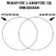 Prokaryote and Eukaryote Interactive Notebook