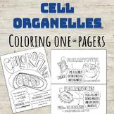 Prokaryote and Eukaryote Organelles Coloring Page Series!