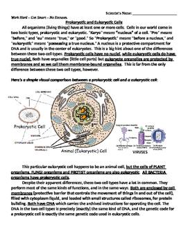 Prokaryote versus Eukaryote Cells