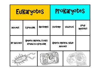 Prokaryote vs Eukaryote Card Sort