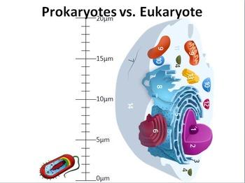 Prokaryote vs. Eukaryote PowerPoint presentation