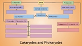 Prokaryote vs. Eukaryote Simple Graphic Organizer