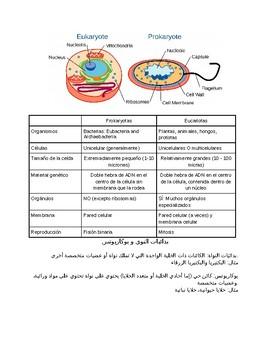 Prokaryotes and Eukaryotes Reading