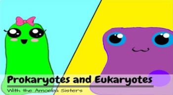 Prokaryotes and Eukaryotes Recap Key by The Amoeba Sisters