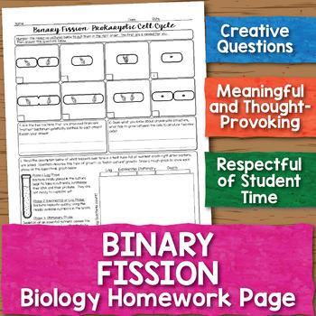 Prokaryotic Cell Division Binary Fission Biology Homework Worksheet