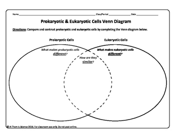 21 New Prokaryotic and Eukaryotic Cells Worksheet   Ozyism in addition  further  moreover Prokaryote Eukaryote Venn Diagram ly Venn Diagram An in addition  furthermore Prokaryotic vs  Eukaryotic Cells  Updated    YouTube also Parts Of Prokaryotic And Eukaryotic Cells Worksheet Answer Key likewise Cells Eukaryotic  Prokaryotic by Angela Holley   TpT besides  in addition Prokaryotic Eukaryotic Student Practice as well  likewise Prokaryotic Cell Worksheet   Sanfranciscolife as well  in addition 3 2  paring Prokaryotic and Eukaryotic Cells – Concepts of Biology further The Cell Cycle Coloring Worksheet Animal And Plant Answers Diagram likewise . on prokaryotic and eukaryotic cells worksheet