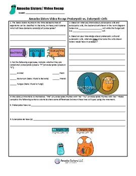 Prokaryotic Cells vs. Eukaryotic Cells by Amoeba Sisters- Free Student  Handout