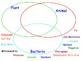 Prokaryotic Cells (vs. Eukaryotic) - Lesson Presentation, Videos, Activities