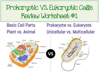 Prokaryotic & Eukaryotic Cell Worksheet