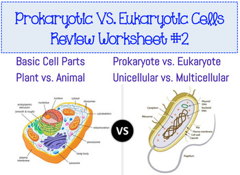 Prokaryotic & Eukaryotic Cell Worksheet #2 by Amy Walker | TpT