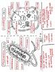 Prokaryotic & Eukaryotic Cells Science Doodles Interactive Notebook Bundle