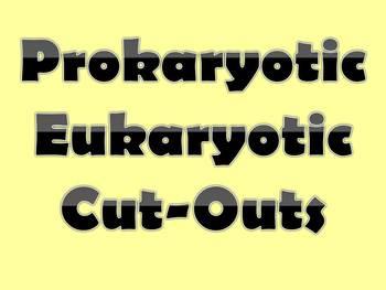 Prokaryotic Eukaryotic Venn Diagram Cut Outs