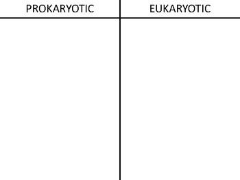 Prokaryotic VS Eukaryotic T Chart Cut & Paste