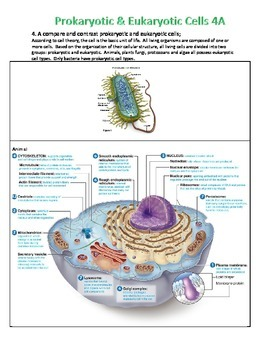 Prokaryotic and Eukaryotic Cell Notes